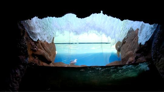 Aquario De Ubatuba Horario De Funcionamento Fotos Loja