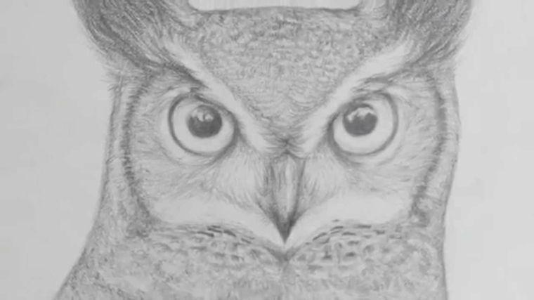 Disegni Facili Da Copiare Proposta Matita Primo Piano Civetta Occhi Molto Realisitici Sfondo Bianco Gufi Disegno Disegni A Matita Owl