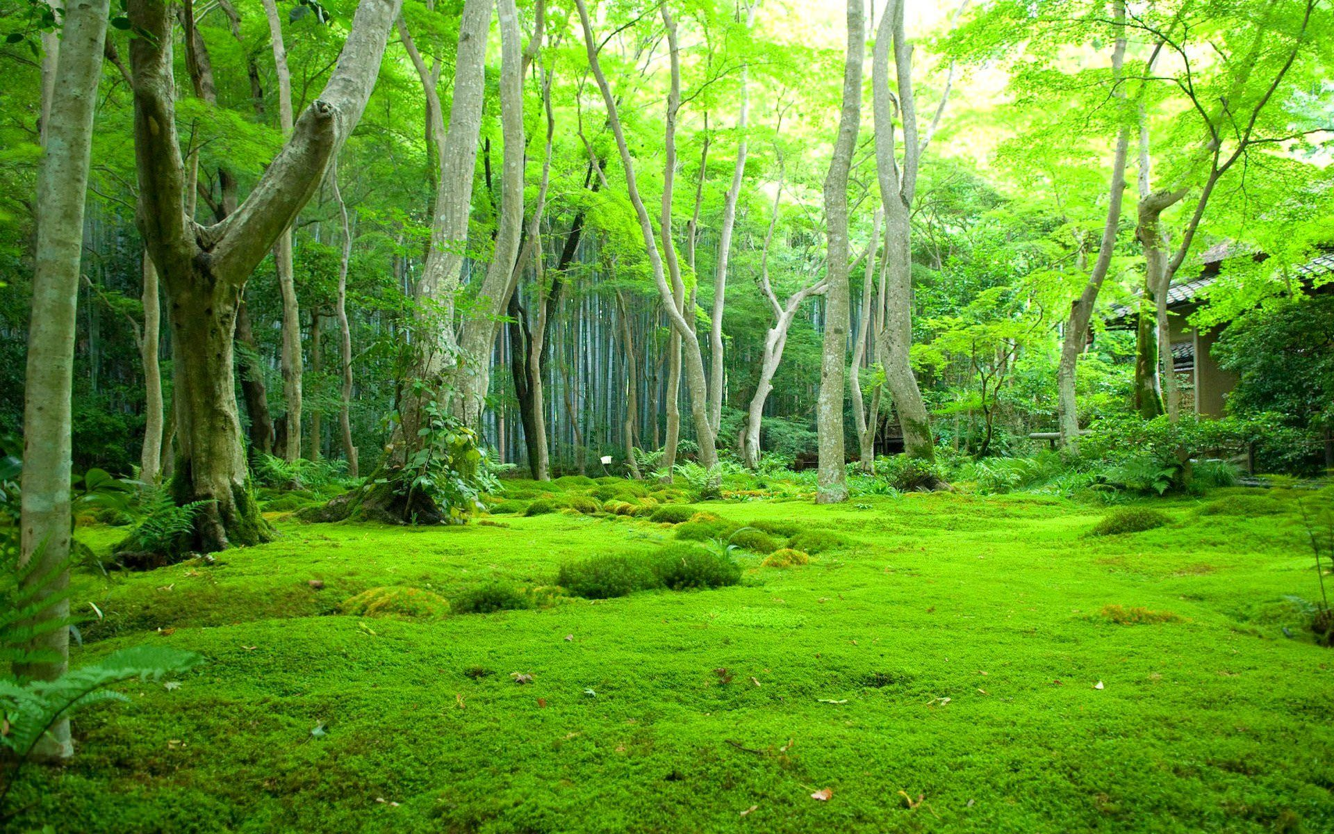 A Beautiful Village In A Natural Forest 1920x1200 Moss Lawn Jungle Wallpaper Forest Wallpaper