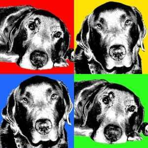 Pascoe Pop Art can turn any photo into a canvas printed Pop Art Portrait: http://www.pascoepopart.com from $199