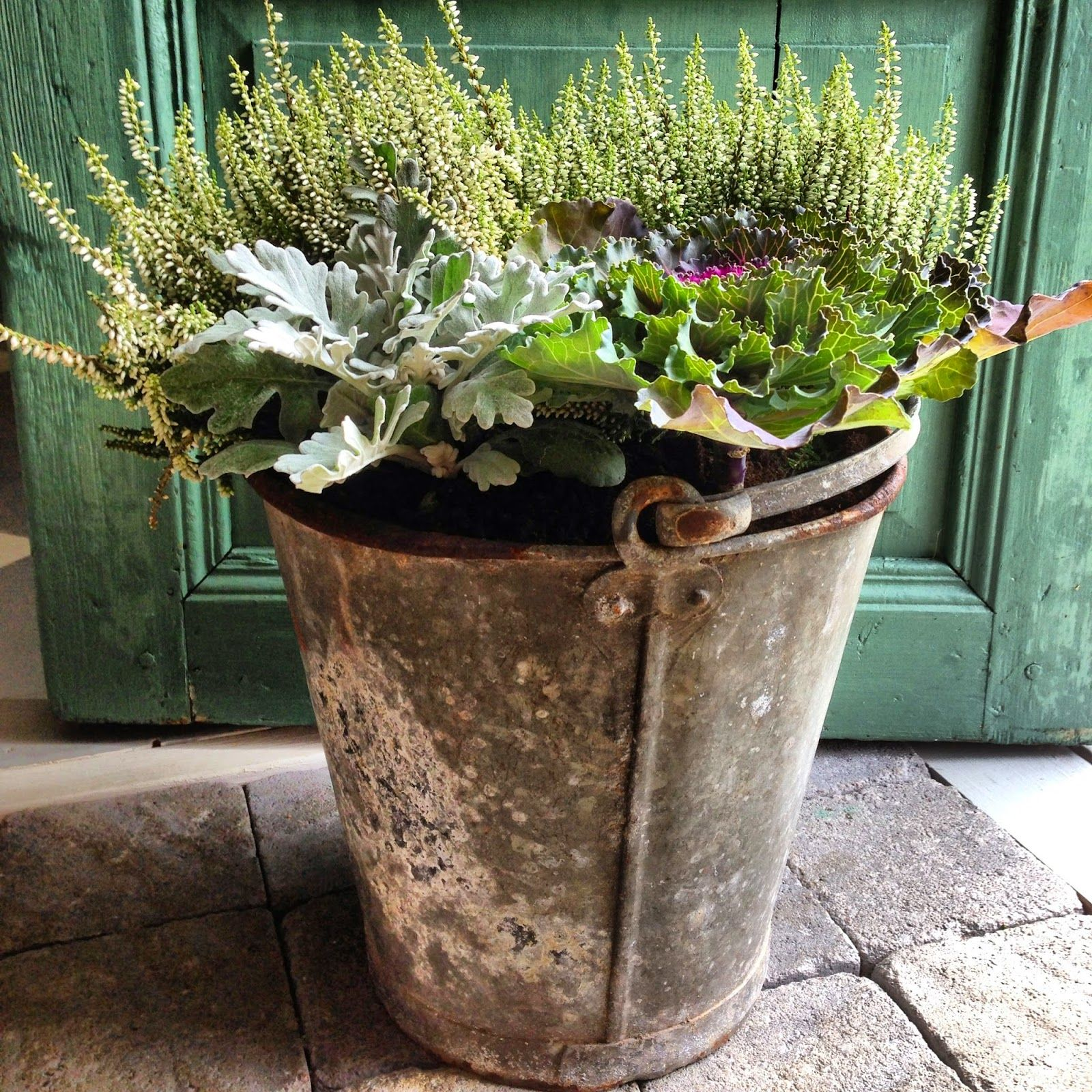 Antique bucket with heather, kale and dusty miller | Glorious ...