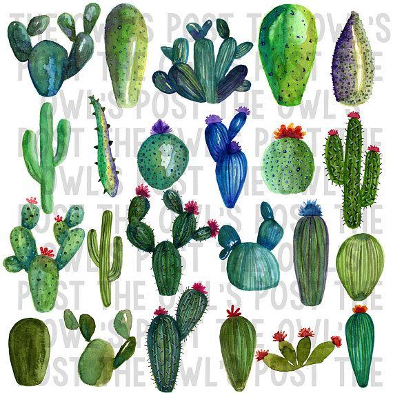 Cacti Clipart Cactus Watercolor Clipart Desert Graphics