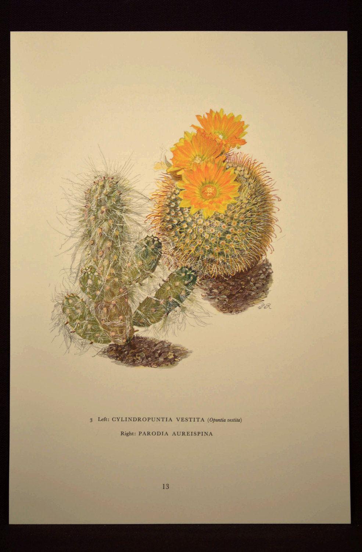 Botanical Wall Decor Nature Art Cactus Print Cacti Decor   Nature ...