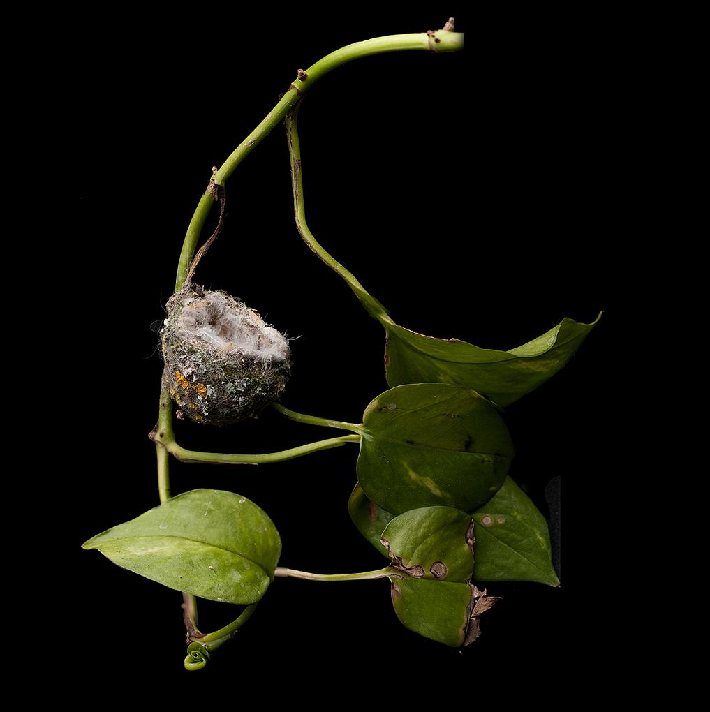 Hummingbird Nest by Sharon Beals