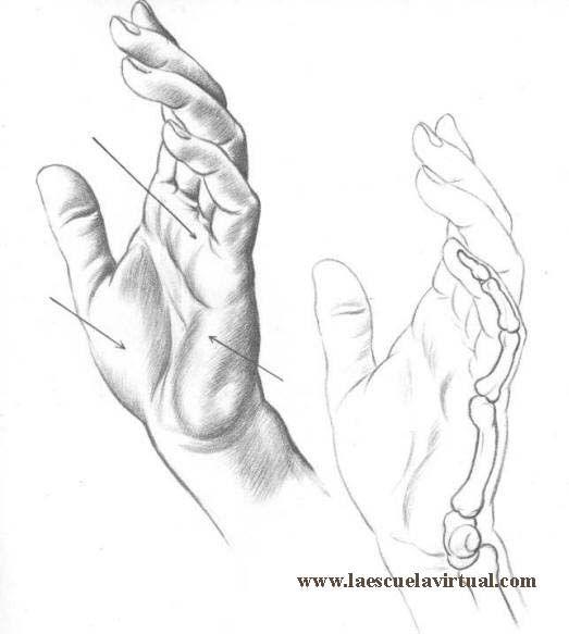 Aprende A Dibujar Manos De Adulto De Nino Tutorial Gratis Curso Online How To Draw Hands Drawing Draw Di Manos Dibujo Manos Dibujo A Lapiz Manos Para Dibujar