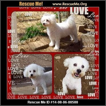 Animal ID: 22Molly & Bianka (female)  Bichon Frise  Age: Adult  Compatibility:Good with Most Dogs, Good with Adults (Not Kids) Personality:Low Energy, Average Temperament Health:Spayed, Vaccinations Current  Molly & Bianka have had a very sad sad life. For 6 years they were locked in a small cage in the basement of a local breeders home. They were used to make babies so their owner could make money off of them. The owner became sick & needed to down-size. So the dogs were ...