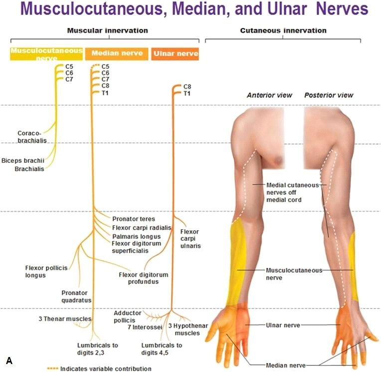 Natural Remedies For Muscle Pain In Back