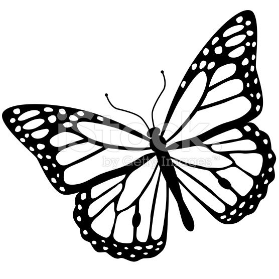 Monarch Butterfly In Black And White Stock Vector Art 58078320 Monarch Butterfly Tattoo Monarch Butterfly Images Monarch Butterfly