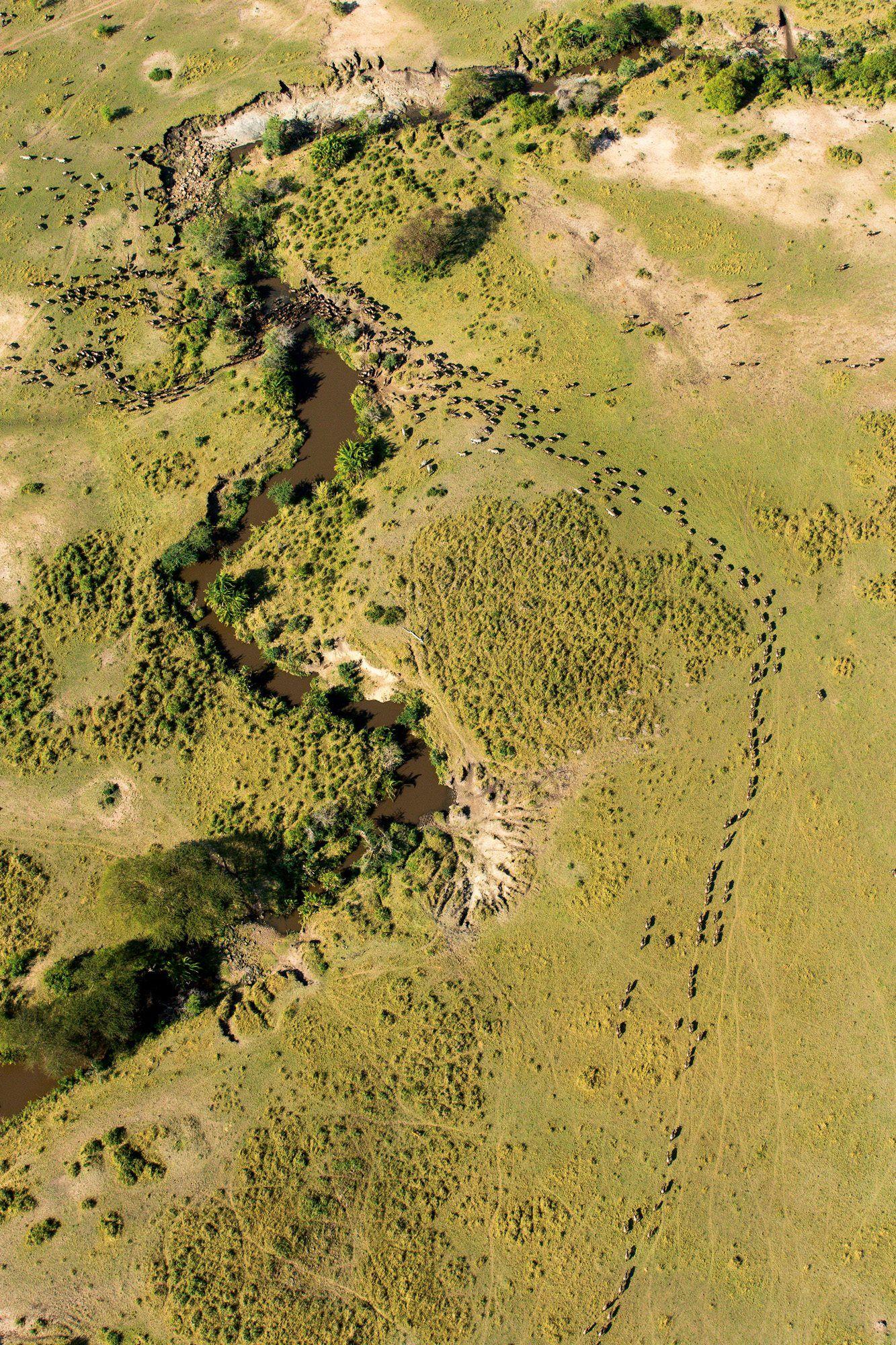 Reserva Nacional Masai Mara (Kenia)