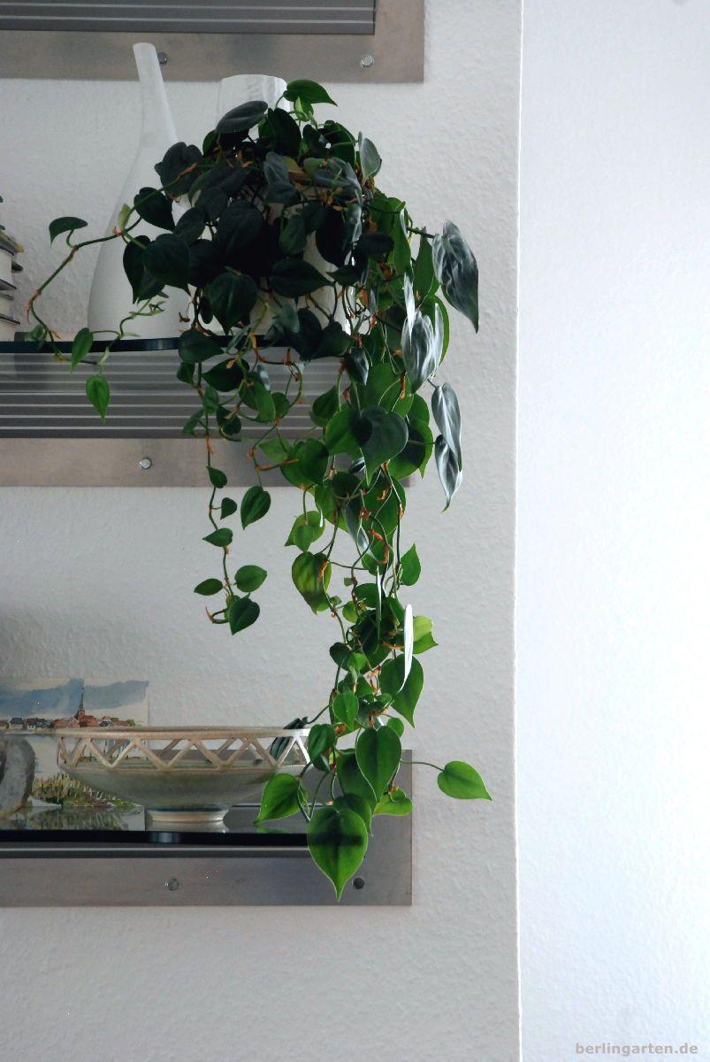 Zimmerpflanzen Tipps Fur Den Schatten Tolle Pflanzen Und Schicke