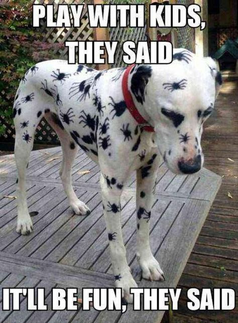 Spiderdog!