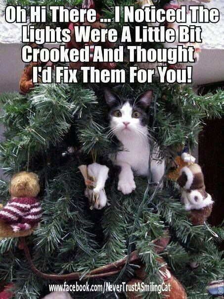 Very Funny Christmas Tree Meme Picture For Facebook