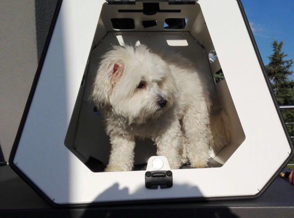 Hundetransportbox Hundebox Fur Den Crashsicheren Hundetransport