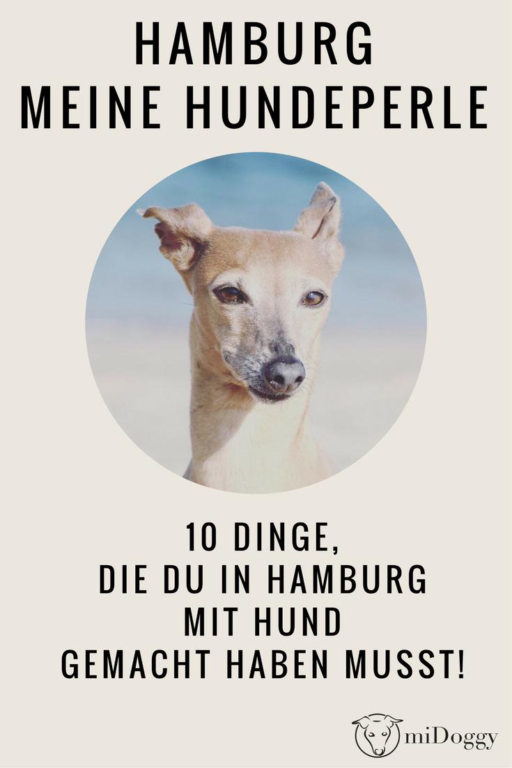 Hamburg Mit Hund Midoggy Community Urlaub Mit Hund Hund Reisen Hamburg Urlaub