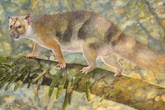 Prowling through the trees of Australia some 18 million years ago was a small marsupial carnivore that weighed only a little over one pound yet was a fearsome predator to lizards, birds and insects.