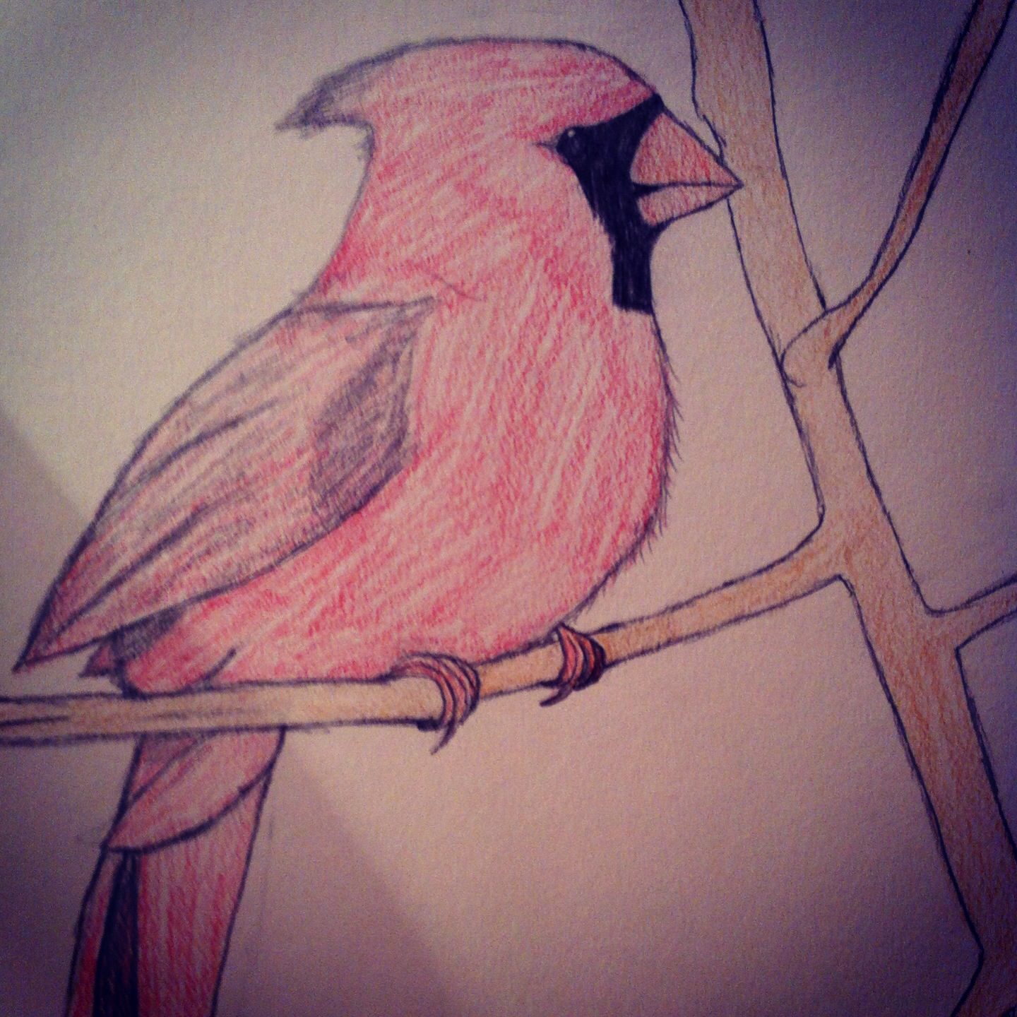My drawing of a cardinal #courtneyC