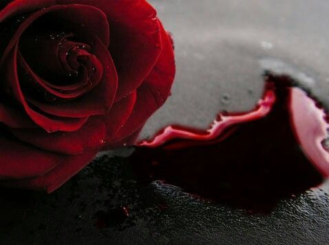 Pin By Hey Chica On I Love Roses Forever Rose Rose Blood