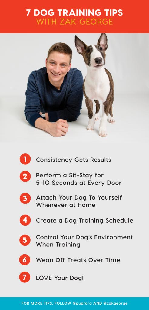 Pin On Dog Puppy Training