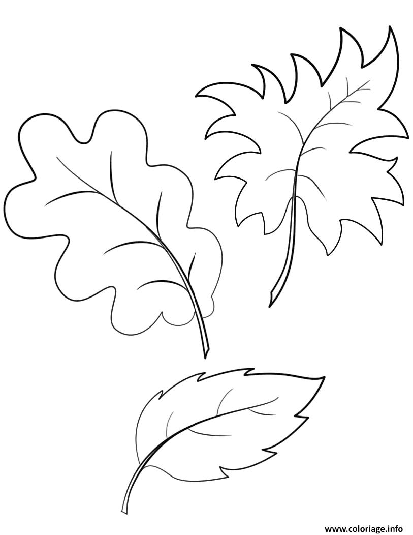 Coloriage fall automne feuilles à imprimer   Coloriages citrouille ...