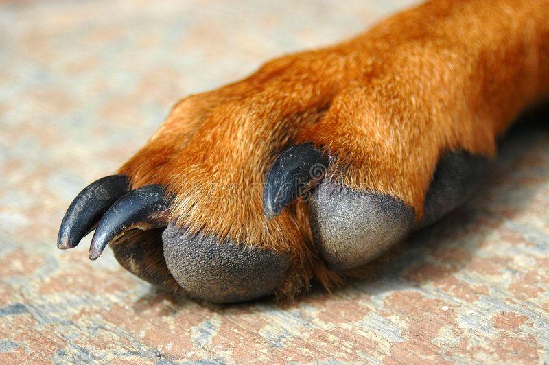 05b81017375c07891eb478c306ef6014 - How To Get Super Glue Off Dog S Paw