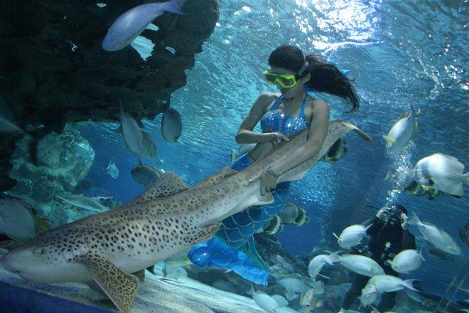 Beijing Aquarium is world's largest inland aquarium ...