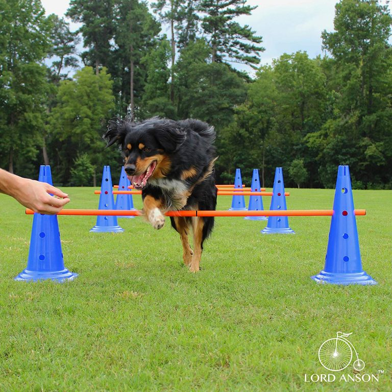 How To Set Up A DIY Dog Agility Course