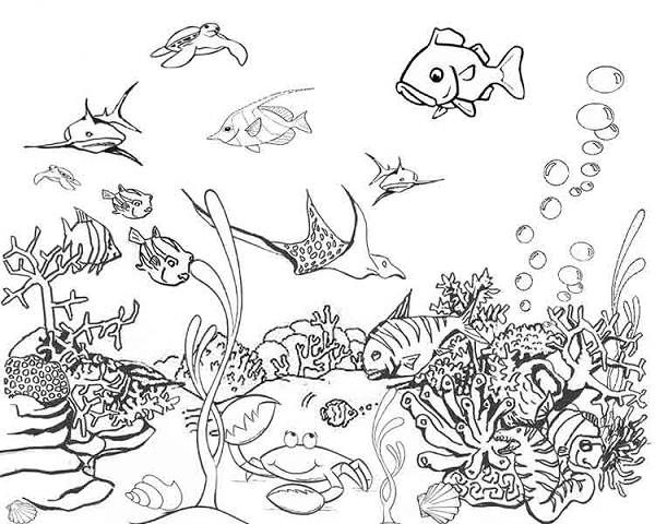 ocean life coloring pages # 3
