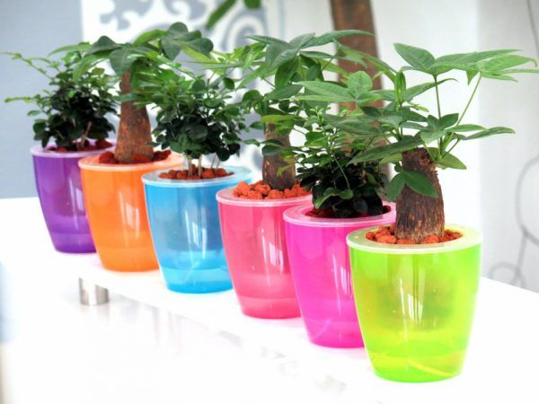 The Big List Of Self Watering Planters For Stylish Gardening