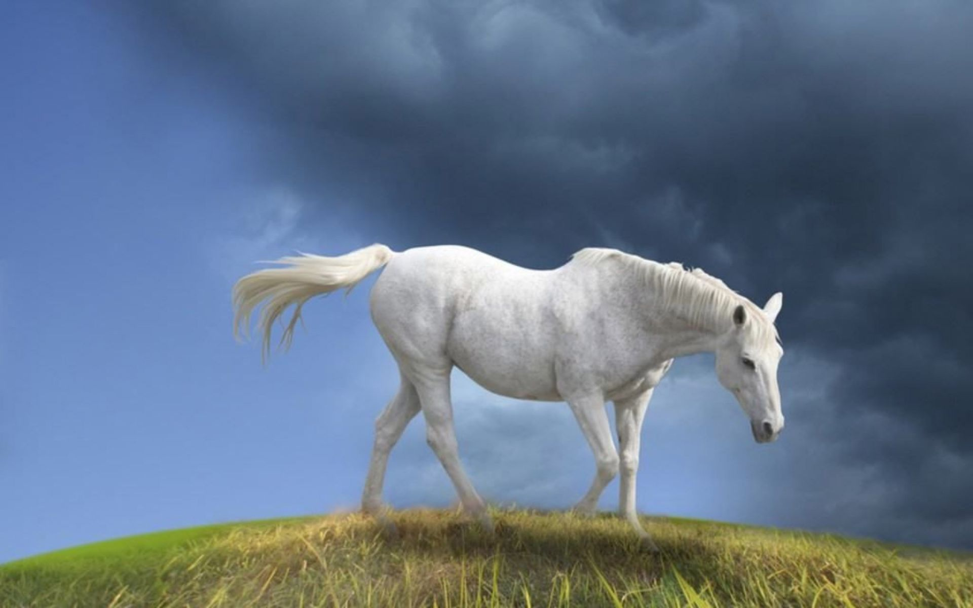 Cool Wallpaper Horse Beauty - 05b94a34204fdcd1c8e24df616527b1f  Snapshot_3853.jpg