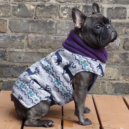Special French Bulldog coat for Jetta :)