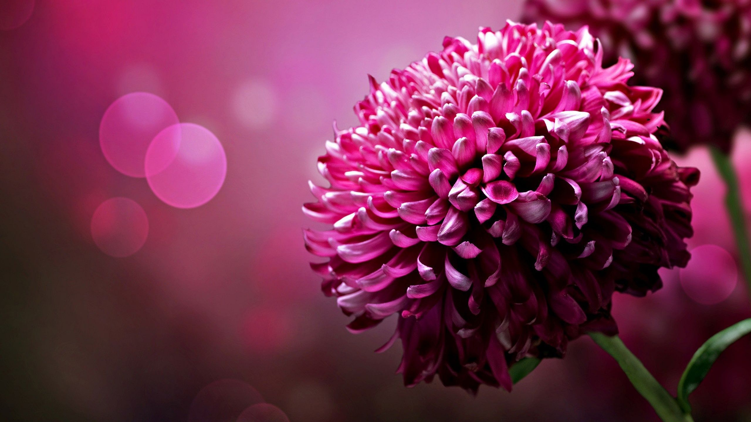 flower wallpapers pink high quality resolution | phone & desktop
