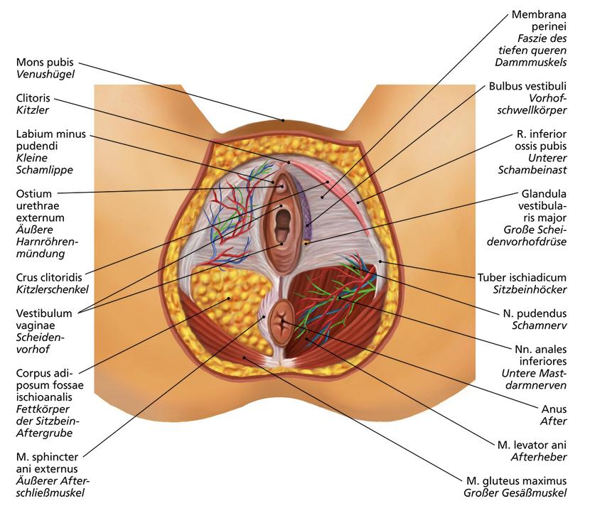 Damm Frau | Anatomie | Pinterest | Damm frau, Frau und Körper