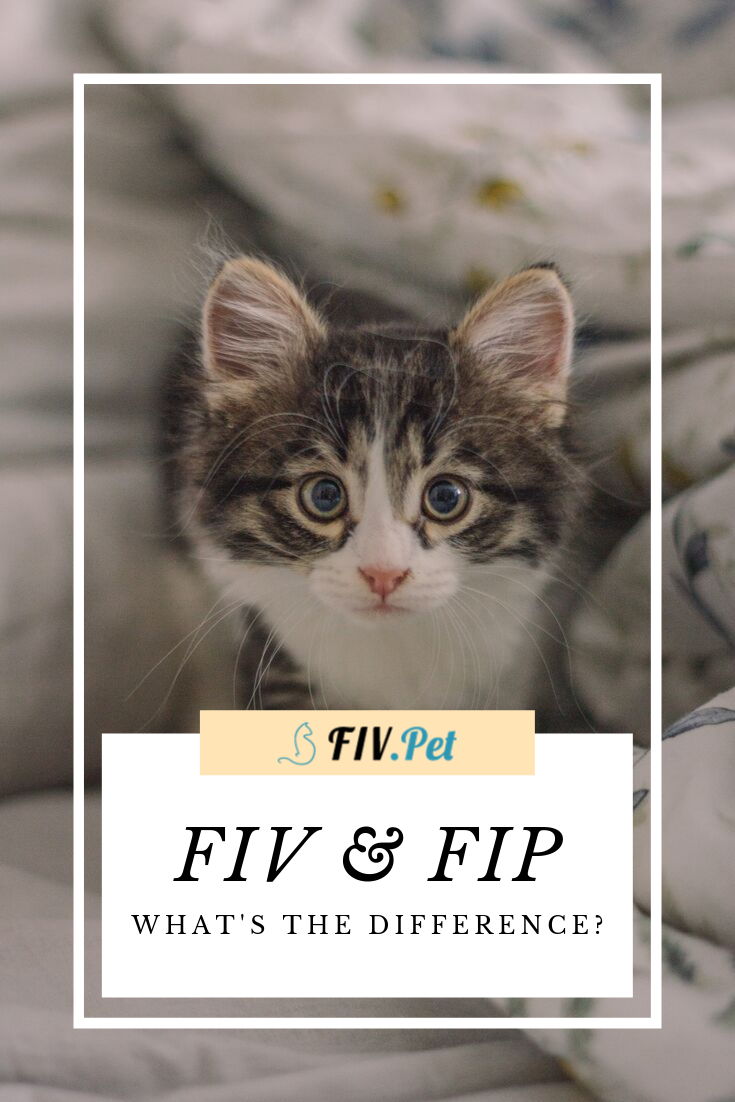Pin on Living with FIV is possible