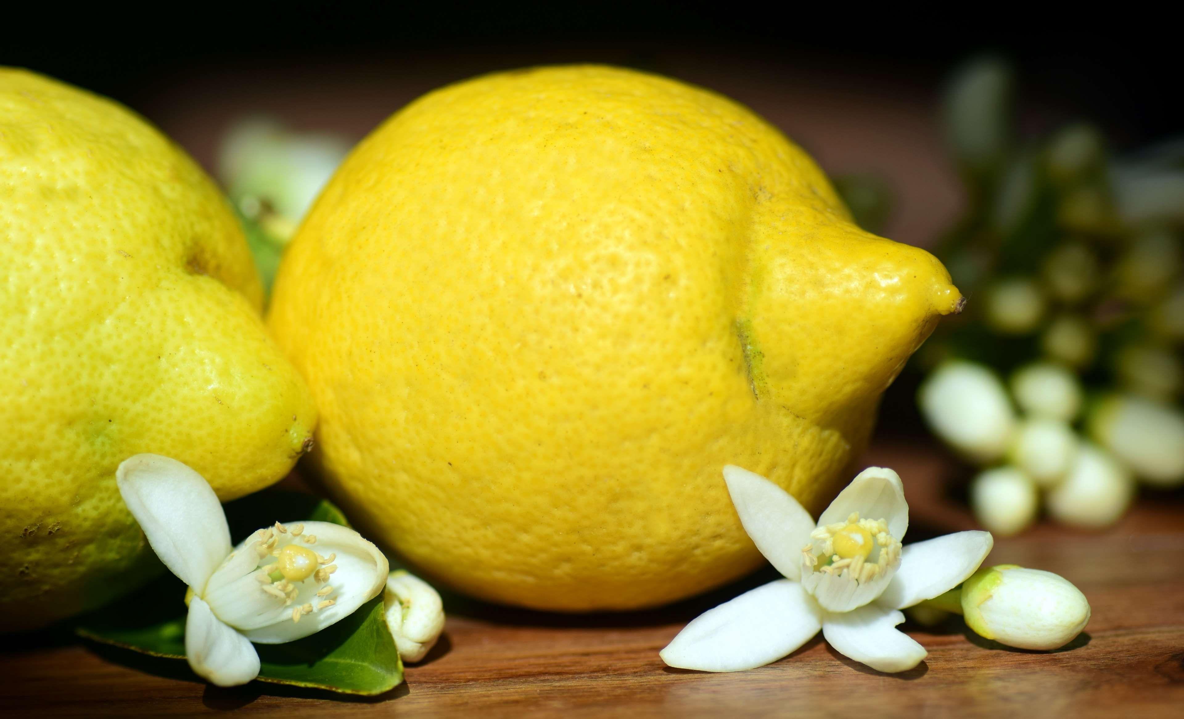 Lemonsmature