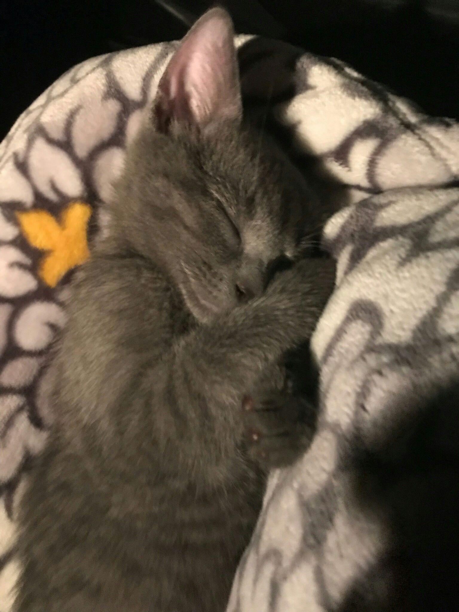2 Month Old Kitten Sleeping Like A Human Http Ift Tt 2j9cekr Sleeping Kitten Kittens Cat Nap