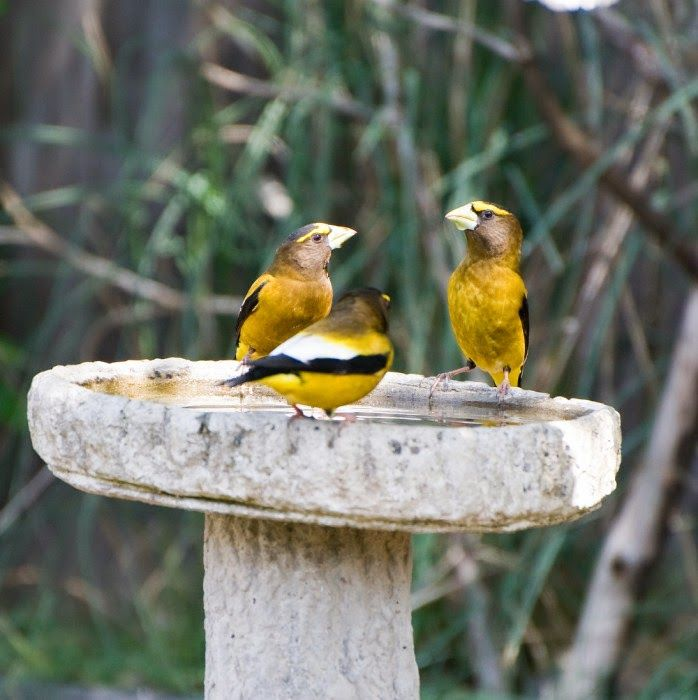 Wild Birds Unlimited: How To Keep Algae Out Of The Bird