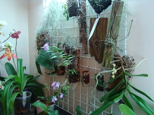 Uprawa Storczykow W Domu Okres Spoczynku Podlewanie Nawozenie Plants