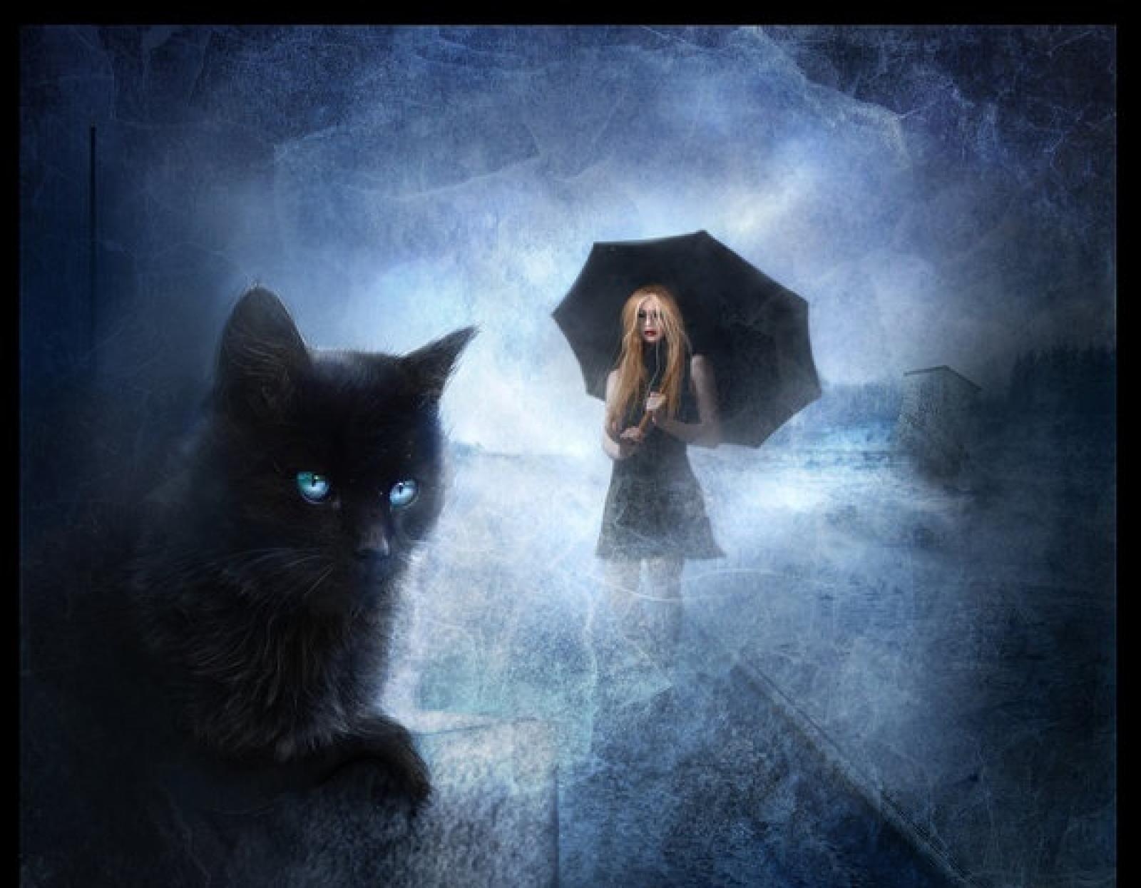 топовой человеку стали нравиться коты мистика ли это чтобы легче