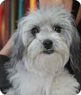 Durham Nc Maltese Poodle Miniature Mix Meet Joy A Dog For Adoption Kitten Adoption Puppies Pets