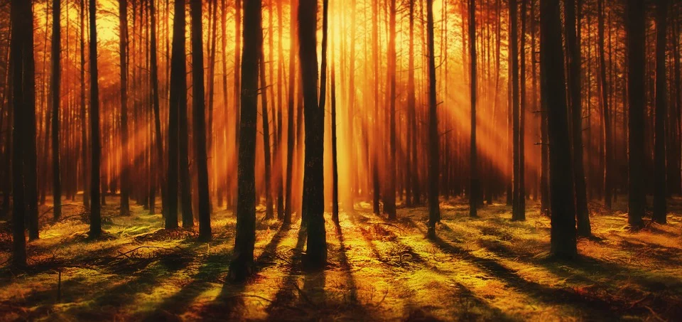 Imagen gratis en Pixabay - Bosque, Sunrise, Árbole