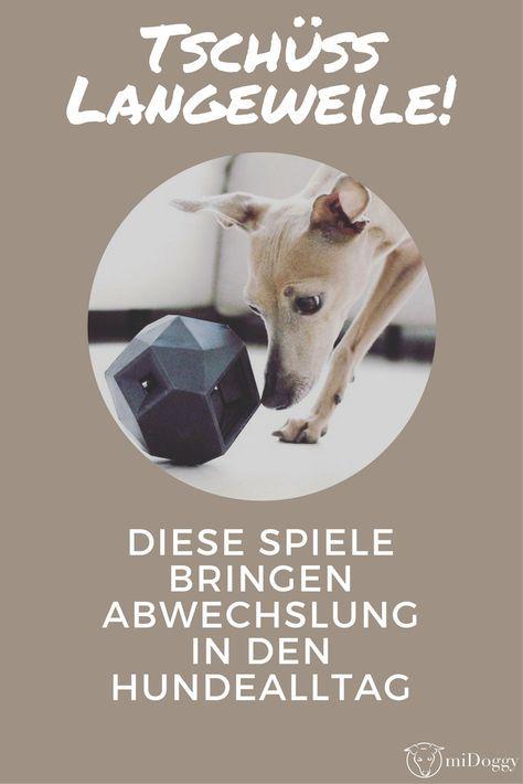 Tschuss Langeweile Diese Spiele Bringen Abwechslung In Den Hundealltag Hunde Hunde Erziehen Und Hunde Spiele