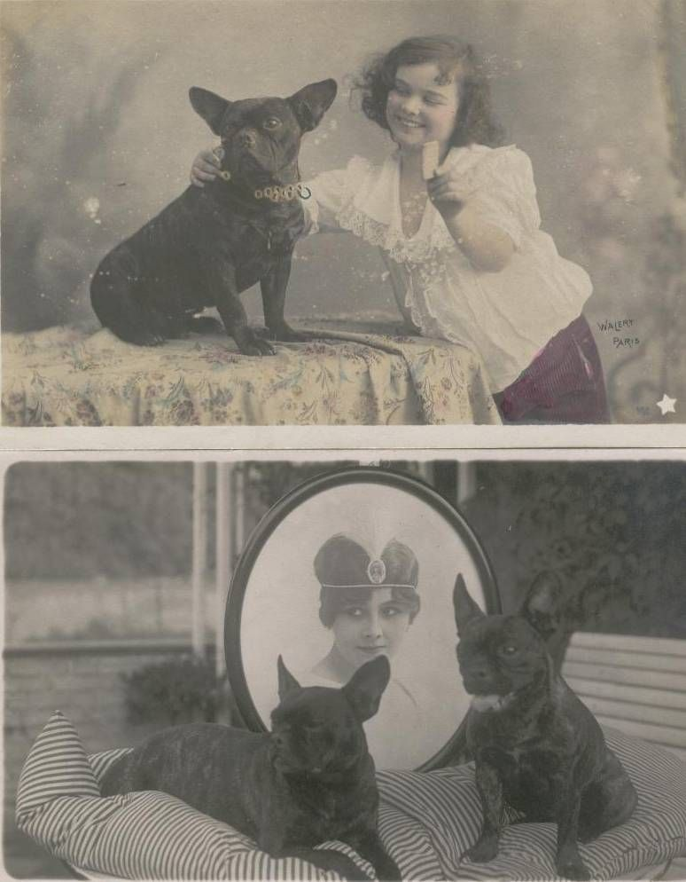Vintage Victorian French Bulldogs