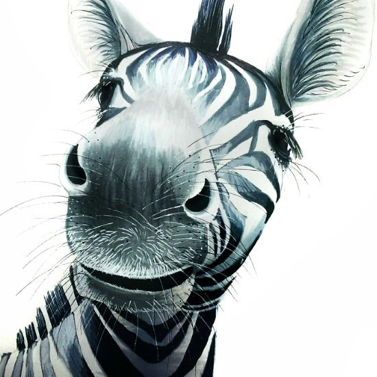 Zebra / Artwork By Alex
