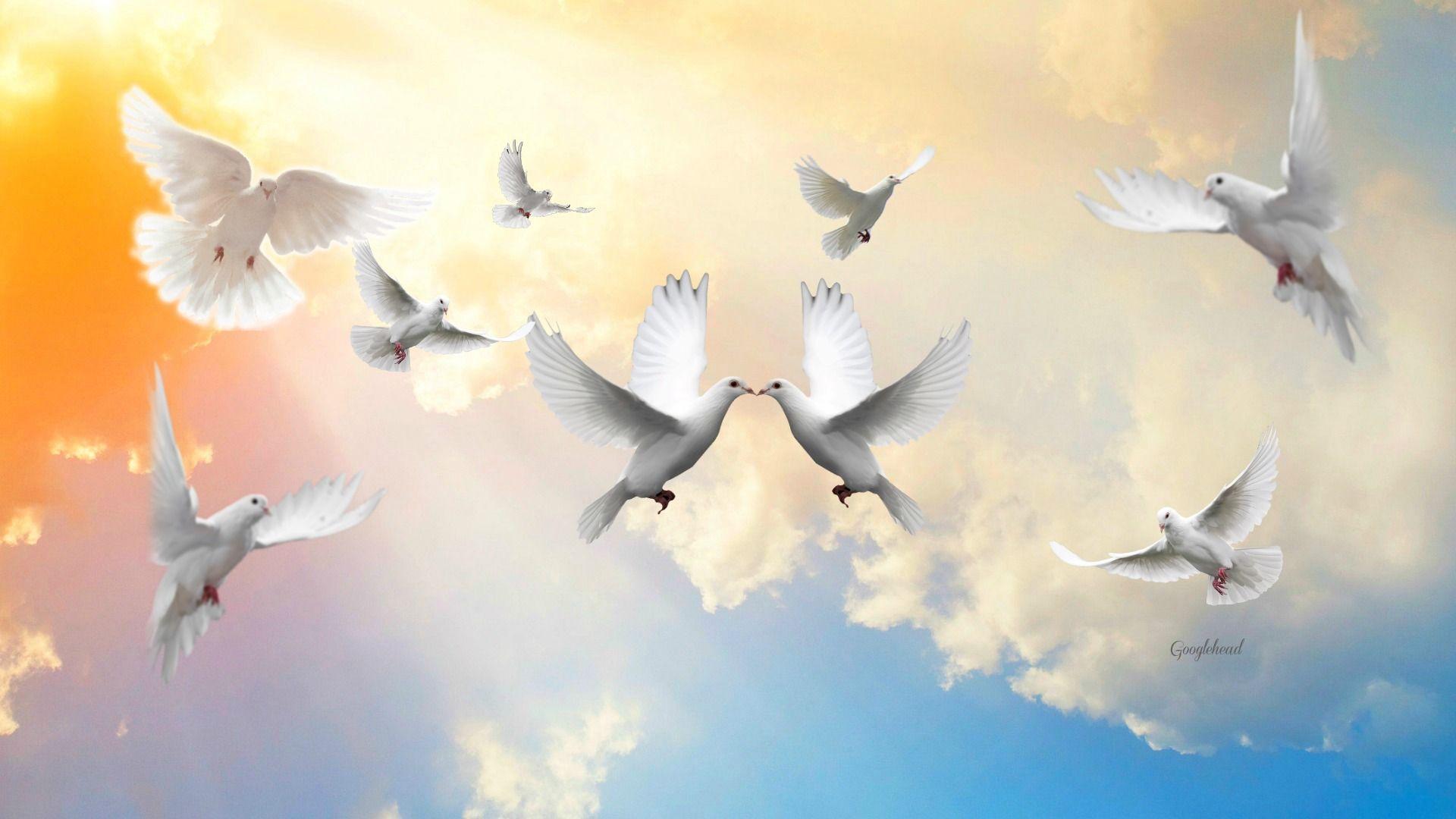 Картинка небо с голубями для детей