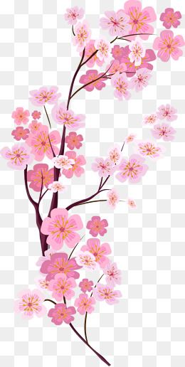 Pink Cherry Blossoms Branches Flowers Plant PNG and
