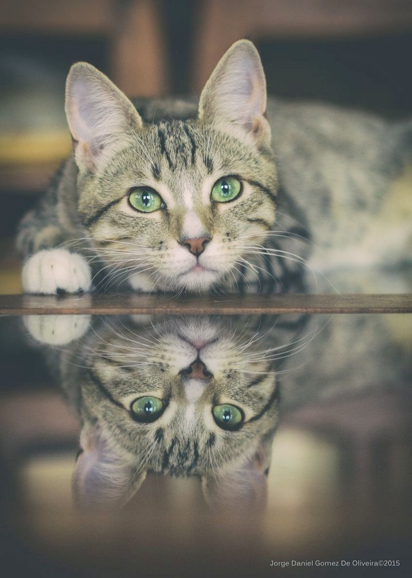Cats And Kittens Pictures Mother Cat And Dead Kittens Cute Cats Animals Pretty Cats