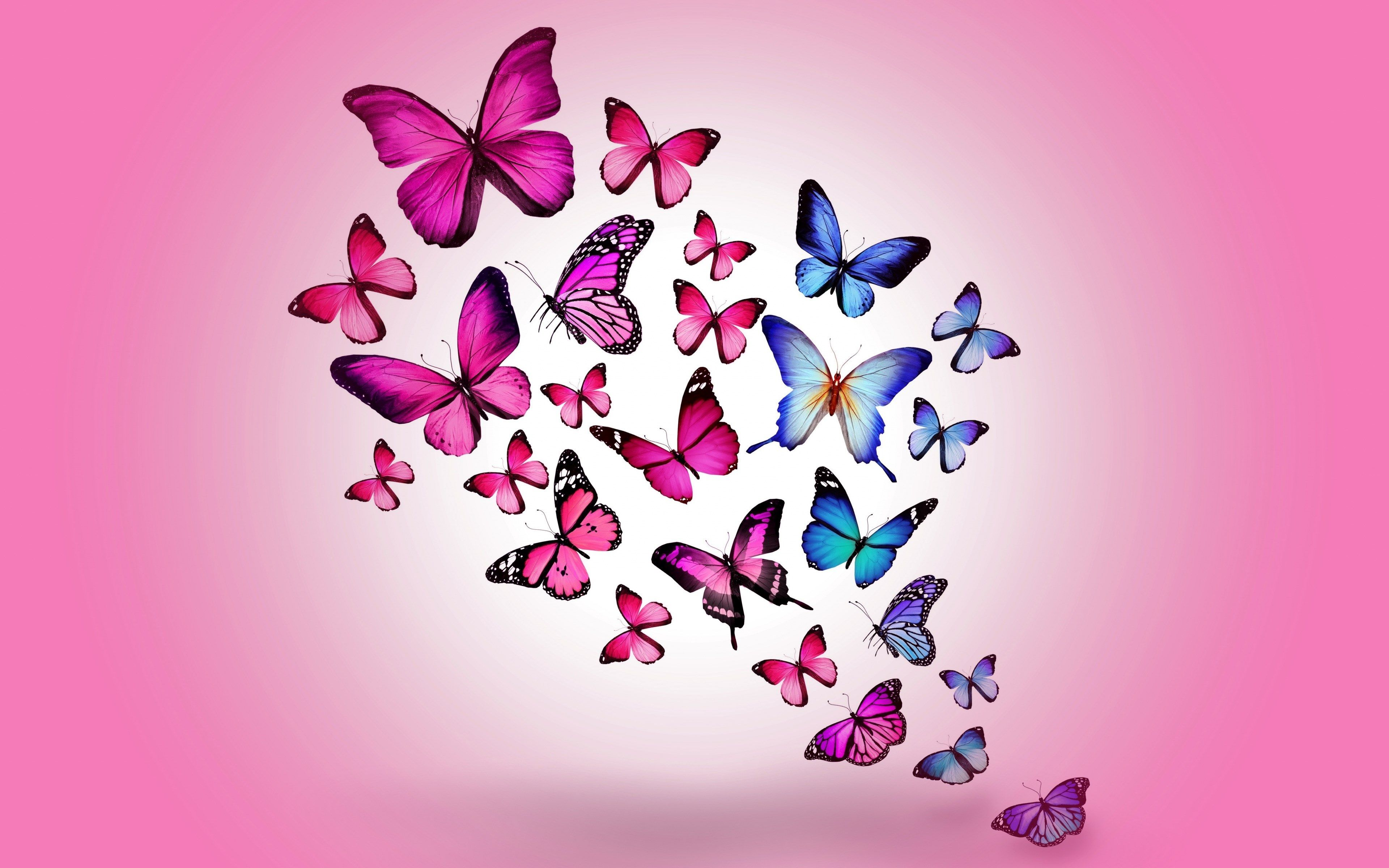 3840x2400 Butterfly 4k Background Wallpaper For Pc Butterfly Wallpaper Butterfly Artwork Butterfly Design