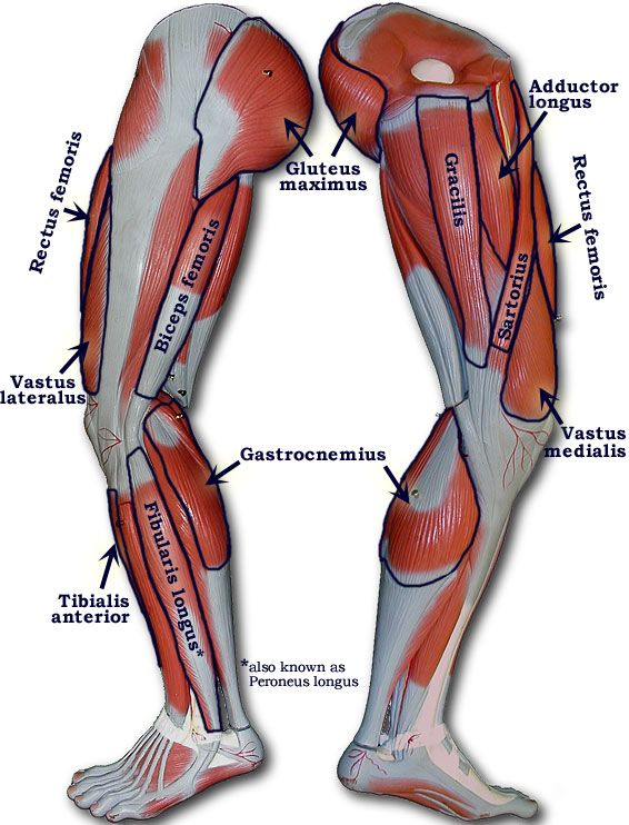 Labeled Muscles Of Lower Leg Yahoo Search Results Nursing