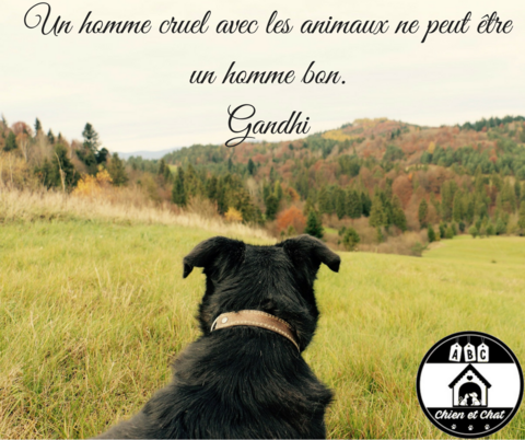 Citations Sur Les Animaux De Compagnie Citation Animaux