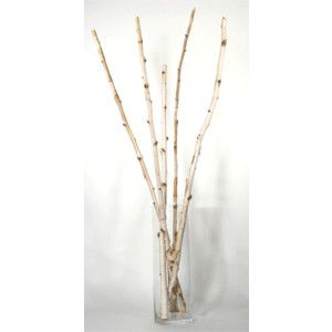 Decorative Branches Birch Himalayan Poles It Would Be Cool To Incorporate In The Wedding Decorations